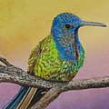Swallow-tailed Hummingbird by Sharon Farber