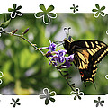 Swallowtail 4 With Flower Framing by Carol Groenen
