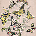 Swallowtail Butterflies - Papilionidae by W Kirby