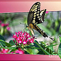 Swallowtail Butterfly 02 by Thomas Woolworth