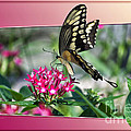 Swallowtail Butterfly 03 by Thomas Woolworth