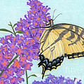 Swallowtail Butterfly And Butterfly Bush by Sarah Batalka