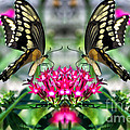 Swallowtail Butterfly Digital Art by Thomas Woolworth