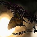 Swallowtail Light by David  Jones