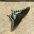 Swallowtail On The Rocks by Laurie Eve Loftin