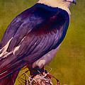 Swallowtail Pose by Deborah Benoit