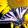 Swallowtail Sunflower by Michael Moore