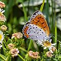 Swallowtail by Viktor Birkus