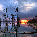 Swamp At Dusk by Larry Braun