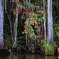 Swamp Beauty by Diana Powell