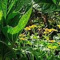 Swamp Bouquet by Bill Wakeley