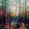 Swamp Colorfest by Lizi Beard-Ward