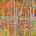 Swamp Colors by Mary Carol Story