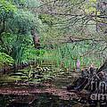 Swamp Garden by Andy Readman