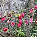 Swamp Garden  by Mary Underwood