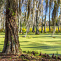 Swamp In Magnolia Plantation And Gardens Charleston Sc by Pierre Leclerc Photography