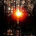 Swamp Light by Lizi Beard-Ward