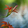 The Wood Lily And Dragon Fly by Lee Craig