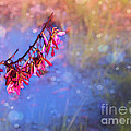 Swamp Maple Bokeh by Judi Bagwell
