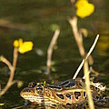 Swamp Muscian by James Peterson