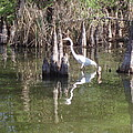 Swamp Reflections by Fortunate Findings Shirley Dickerson
