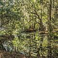 Swamp Reflections by Jane Luxton
