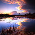 Swamp Sunset I by Ray Mathis