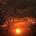 Swamp Sunset  by Tim Fillingim