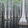 Swampy Reflections by Todd Smith