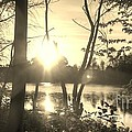 Swampy Sunset #4 by Lisa Gifford