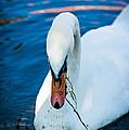 Swan 2 by Dobromir Dobrinov