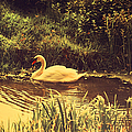 Swan At The Golden Lake by Jenny Rainbow