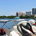 Swan Boats And Buildings by Denise Mazzocco