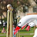 Swan Boats by Beverly Tabet