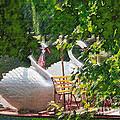 Swan Boats by Jack Gannon