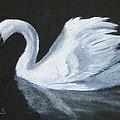 Swan by Catherine Swerediuk