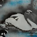 Swan Dream by Barry Boom