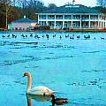 Swan Duck Geese by Joseph Wiegand
