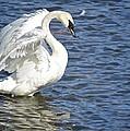 Swan Feather by Craig Voth