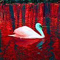 Swan In Red by Joseph Wiegand