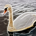 Swan In The Water Fractal by Pati Photography