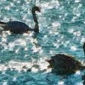 Swan Lake by Ayse Deniz
