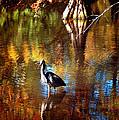 Swan Lake Heron II by Jeff McJunkin
