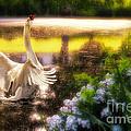 Swan Lake by Lois Bryan