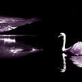 Swan Lake by Mal Bray
