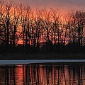 Swan Lake by Michael J Samuels