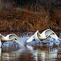 Swan Lake by Mike  Dawson