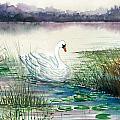 Swan Lake by Steven Schultz