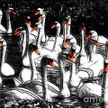Swan Lake by Susie Peek