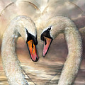 Swan Love by Carol Cavalaris